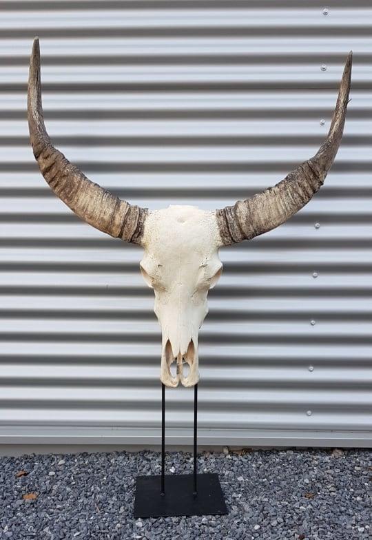 Waterbuffel Decoratie Schedel Skull American Sale Shop